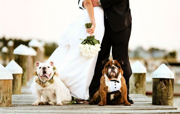 Wedding Chapel- Including Your Pet in the Wedding